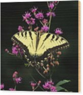 Smoky Mountain Butterfly Wood Print
