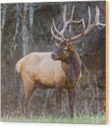 Smoky Mountain Elk II - North Carolina's Cataloochee Valley Wildlife Wood Print