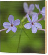 Smoky Wildflowers Wood Print