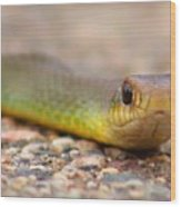 Smooth Green Snake ... Montana Art Photo Wood Print