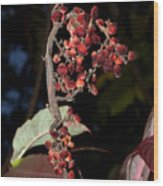 Smooth Sumac Flower Wood Print
