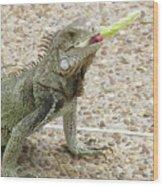 Snacking Iguana On A Concrete Walk Way Wood Print