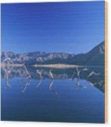 Snags- Lake Isabella Wood Print