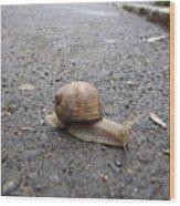 Snail 2 Wood Print