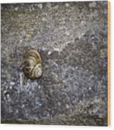 Snail At Ballybeg Priory County Cork Ireland Wood Print