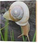 Snail Wood Print