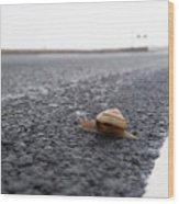 Snail Crossing... Wood Print