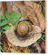 Snail Home Wood Print