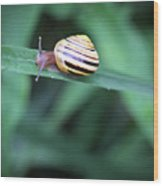 Snail In His Green Jungle Wood Print