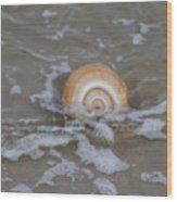 Snail In The Surf Wood Print