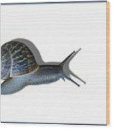 Snail Mail Wood Print