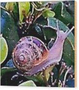 Snail On A Bush Version 2 Wood Print