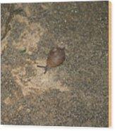 Snail On Sidewalk Wood Print
