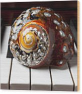 Snail Shell On Keys Wood Print