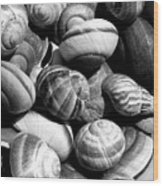 Snail Shells In Black And White Wood Print