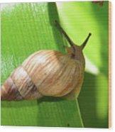 Snail Work B Wood Print