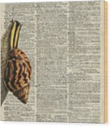 Snail Worm On Dictionary Page Wood Print