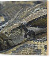 Snake At Rest. Wood Print