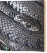Snake Wood Print