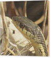 Snake Eye Wood Print