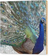 Snake Farm Peacock Wood Print