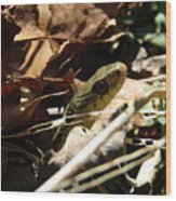 Snake In Nature Wood Print
