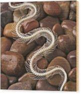 Snake Skeleton  Wood Print by Garry Gay