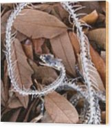 Snake Skeleton Wood Print