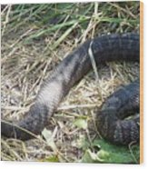 Snake So Pretty Wood Print