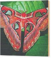 Snakehead Moth Wood Print