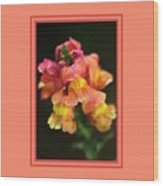 Snapdragon Flowers With Design Wood Print