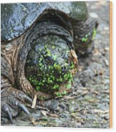 Snapping Turtle Wood Print