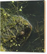 Snapping Turtle Head Wood Print