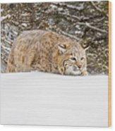 Sneaky Cat Wood Print