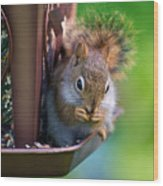 Sneaky Red Squirrel Wood Print