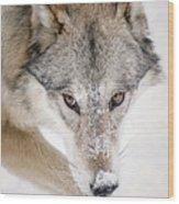 Sneaky Wolf Wood Print