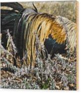 Sneeking Rooster Wood Print