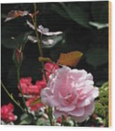 Sniff - Tea Rose Wood Print