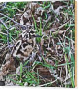 Snipe In Camouflage 2 Wood Print