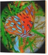 Snooty Butterfly Wood Print
