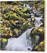 Snoqualmie National Fores Wood Print