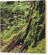 Snoqualmie National Forest Wood Print