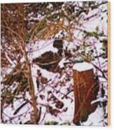 Snow And Tree Trunk Wood Print