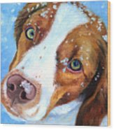 Snow Baby - Brittany Spaniel Wood Print by Lyn Cook