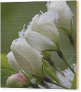 Snow Blossoms Wood Print