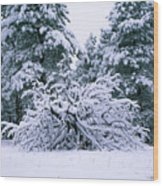 Snow Burdened Tree In The Flatirons Wood Print