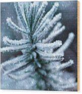 Snow Cover Pine Wood Print