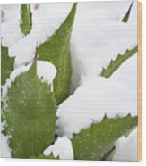Snow Covered Agave Wood Print