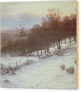 Snow Covered Fields With Sheep Wood Print