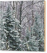 Snow-covered Forest, Wisconsin, Usa Wood Print